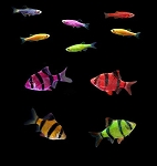 GloFish (r) 10 Gallon Active- 4 Barbs, 6 Danio