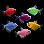 GloFish (r) Tetra- Pick your color