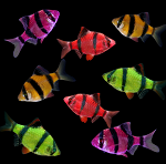 GloFish (r) Barb Deluxe Package- 2 each color 4 colors